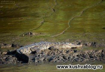 крокодиловая речка